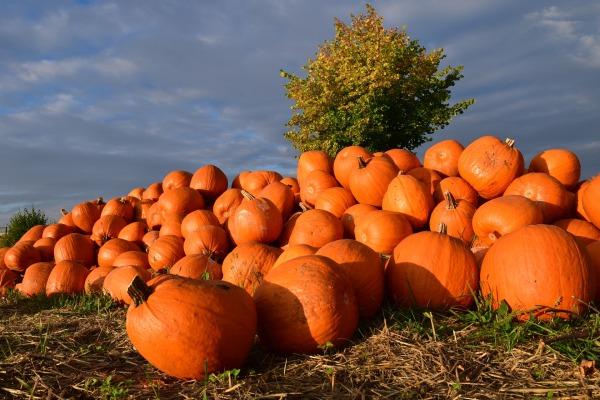 pumpkin-1653011_1920