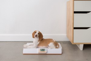 babycheck-pet-scale